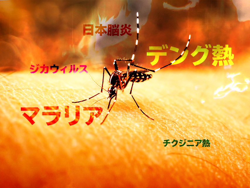 Southeast Asian mosquito measures